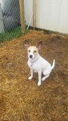 Shepherd Dog: Suzy Ann