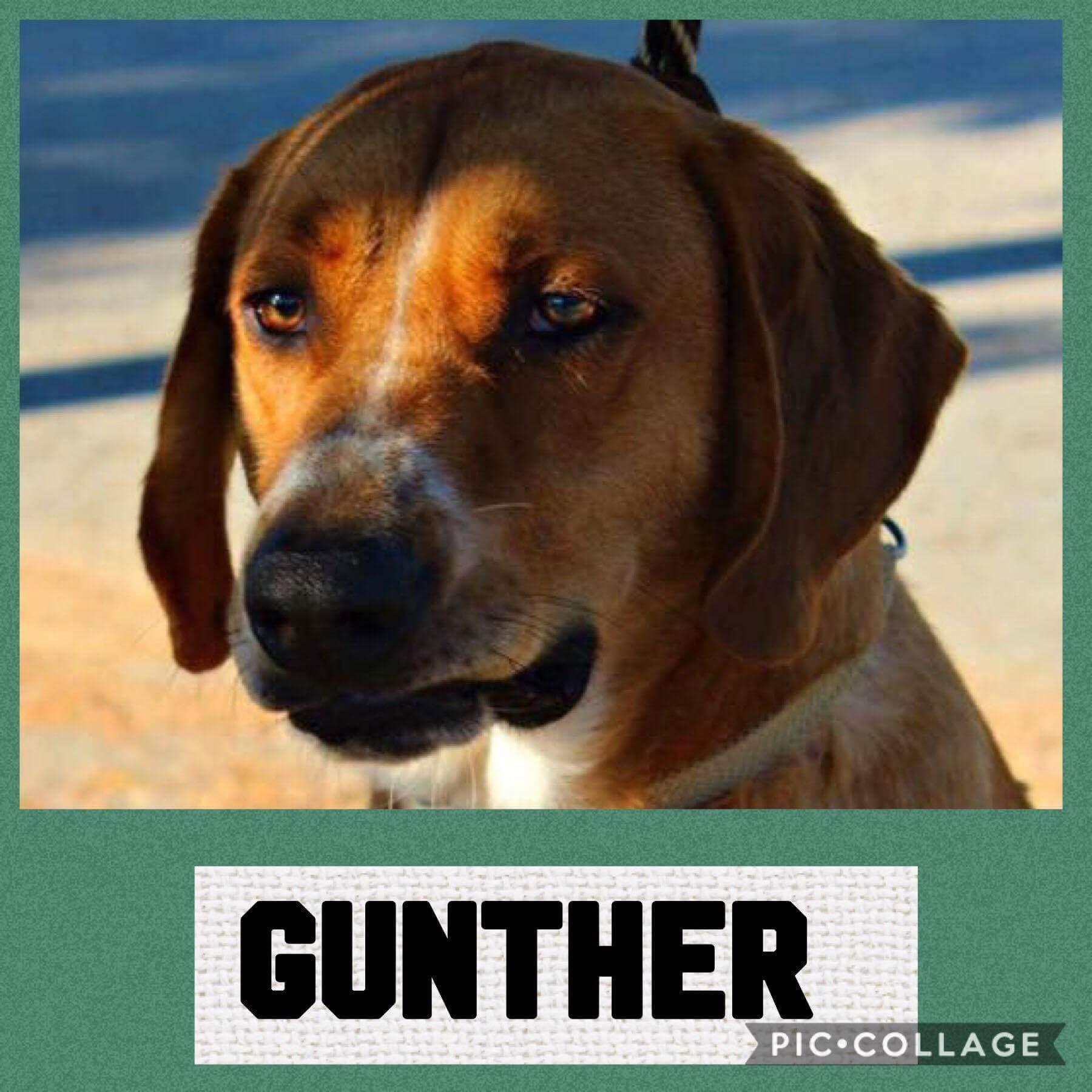 Gunther 1