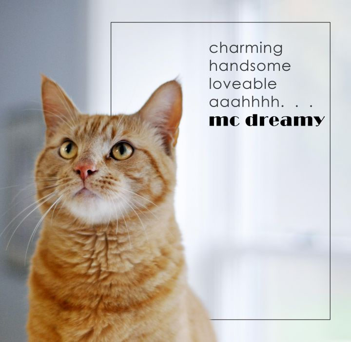 A DREAM CAT-MCDREAMY-OUR FEATURED CAT 1