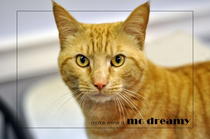 A DREAM CAT-MCDREAMY-OUR FEATURED CAT 2