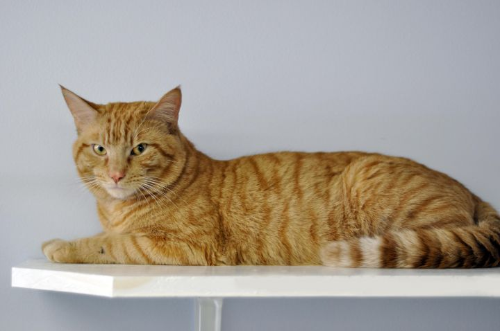 A DREAM CAT-MCDREAMY-OUR FEATURED CAT 3