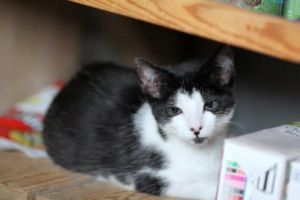Matilda came to us together with her sister Molly She is a petite girl with black and white marks