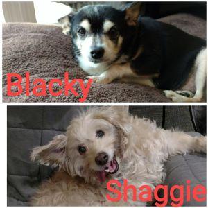 Blacky and Shaggie