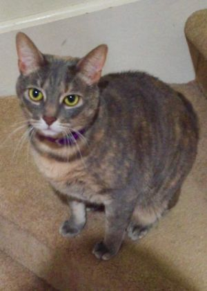 Written by original pet parent Mia is a 2 year old rescue She was adopted and has been a wonderful
