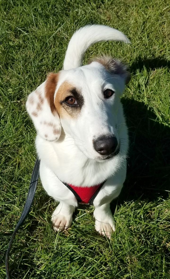 Daisy- Come Meet Me In DC!!! 1