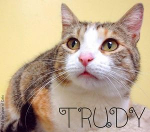 If you like calicos Trudy is the cat for you Not only is she gorgeous she is