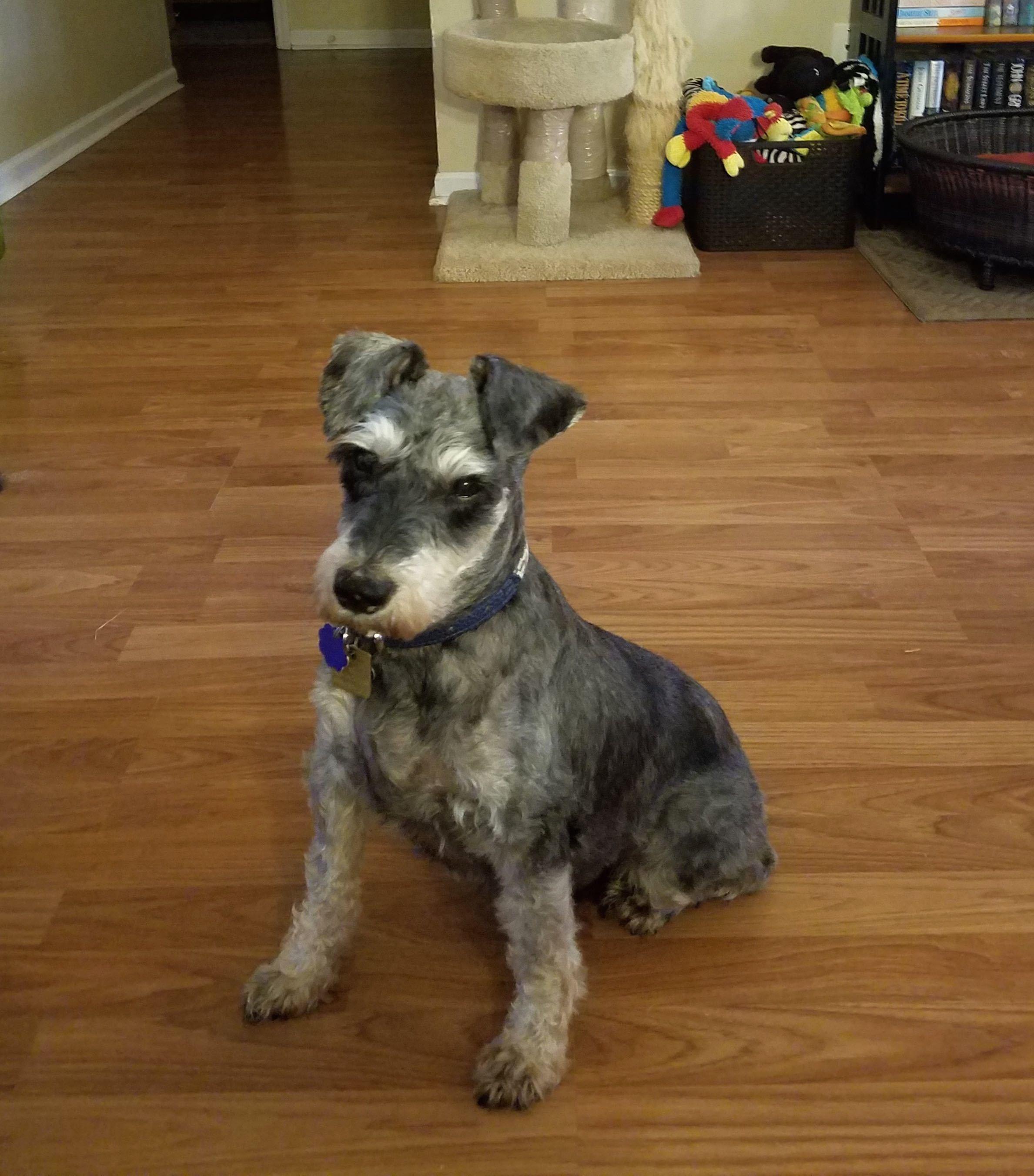 Dog For Adoption Hunter Near Sharonville Oh Petfinder