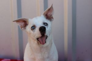 Sweet little boy with no sight and no hearing yet confident and happy ADORABLE