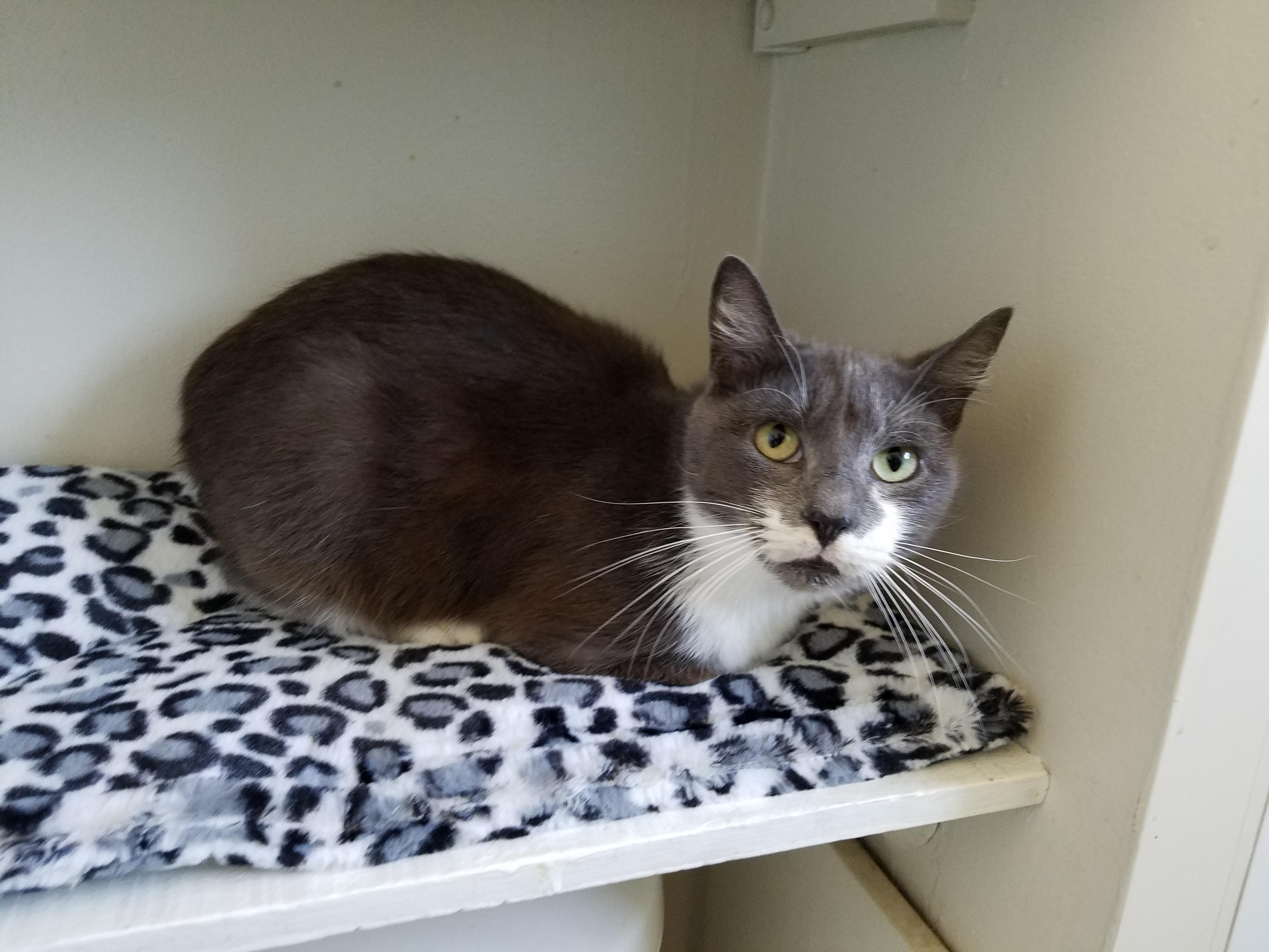 Cat for Adoption – Granny near Carbondale PA