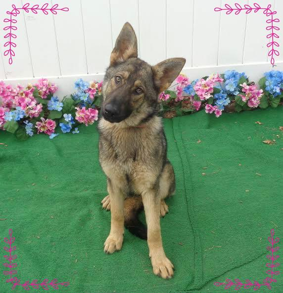 GRACIE- Avail 4/21