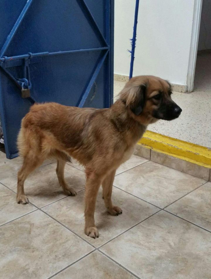 SOL, an adopted Terrier Mix in Guaynabo, PR