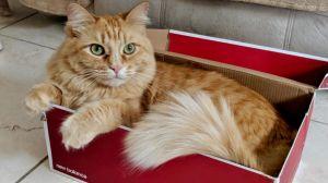 Ginger 6 AKA Sofi