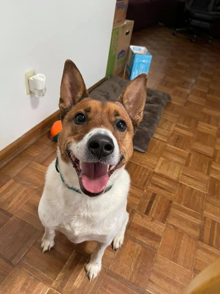Harvey, an adoptable Mixed Breed in Fredericksburg, VA