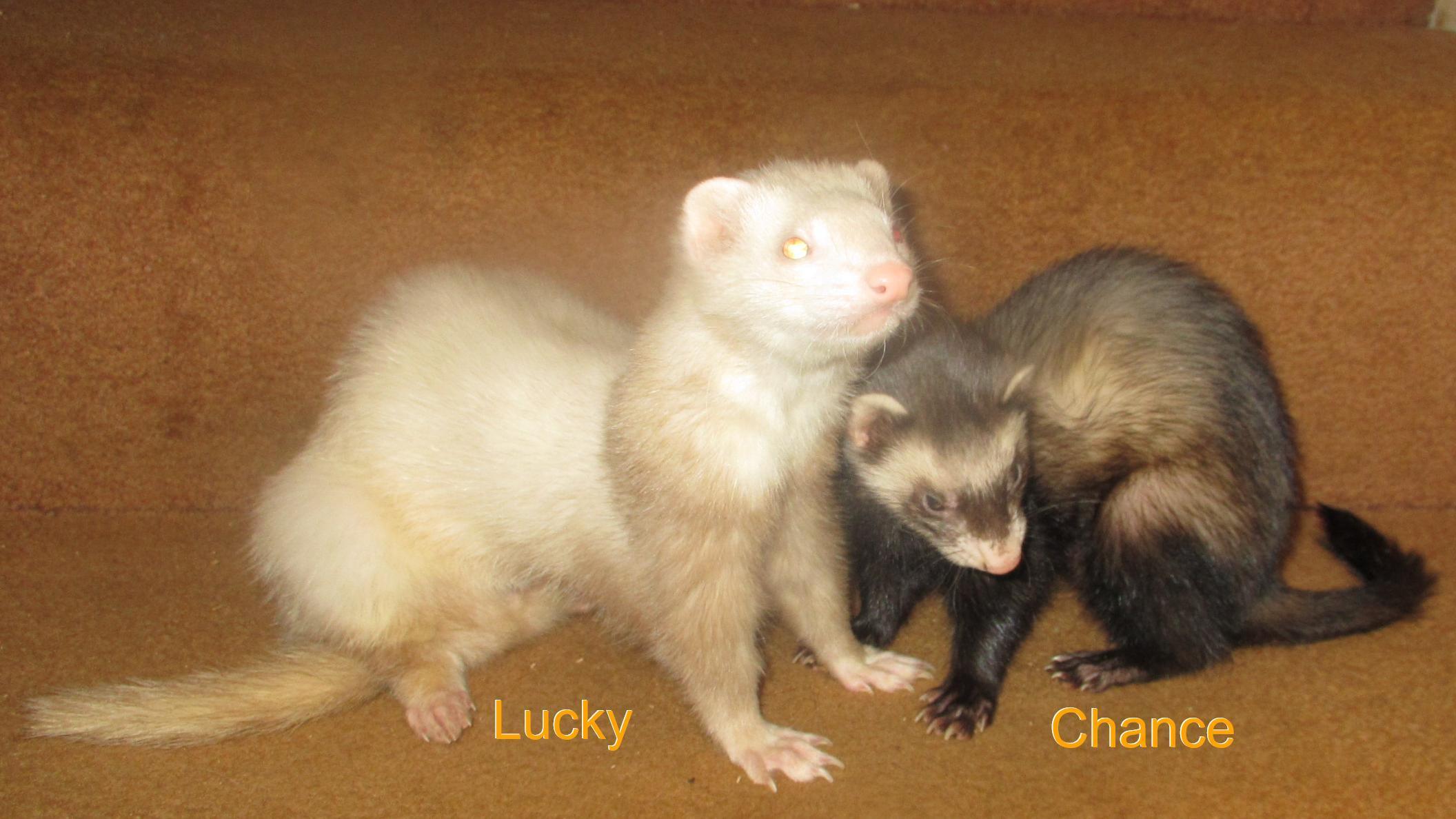 Lucky & Chance
