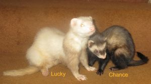 Photo of Lucky & Chance