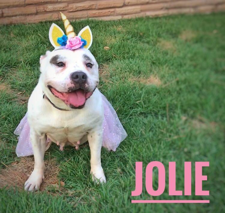 Jolie 1