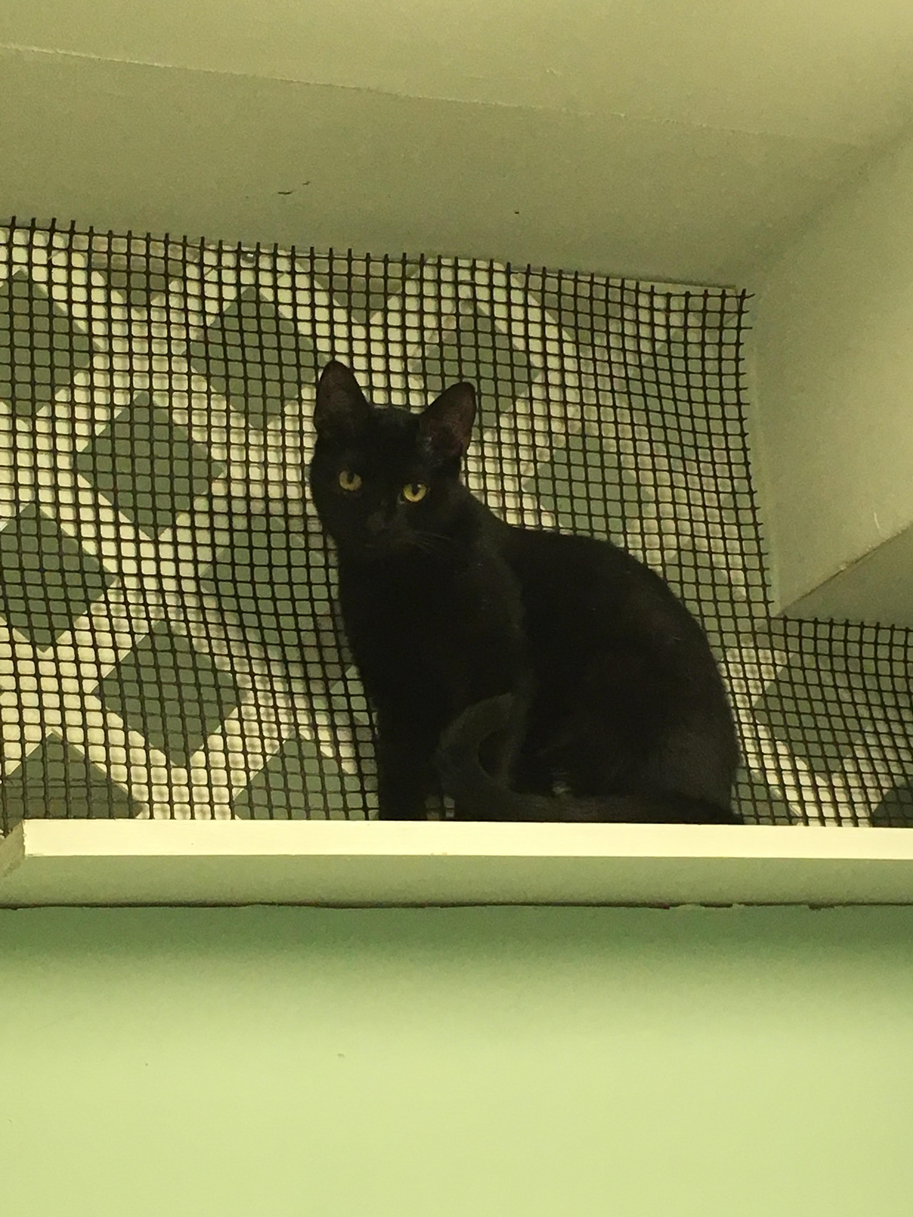 Cat for Adoption – Lynn Hudson NH adoption center near Hudson