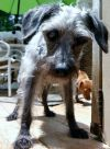 Poodle Dog: MrMagoo