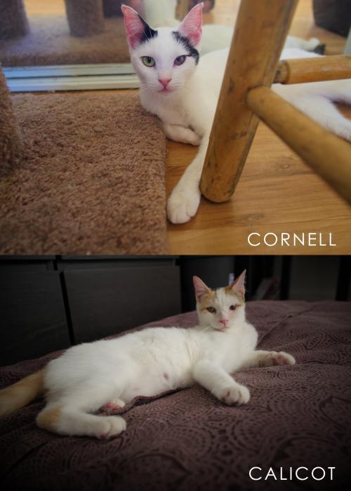 CALICOT & CORNELL