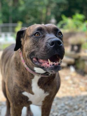You can fill out an adoption application online on our official website Annie was found on someone