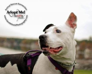 You can fill out an adoption application online on our official websitePrincess Hattie has endured