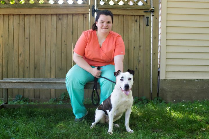 Thumbelina, an adopted Bull Terrier Mix in Armonk, NY