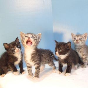 . Kittens! .