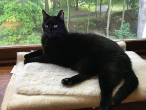 Knight is a 35 year old very affectionate boy Hes a real lovebug with people He is Ok with cats