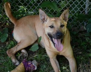 Amar is an extremely loyal dog and super playful He loves people and is a big cuddler He can be