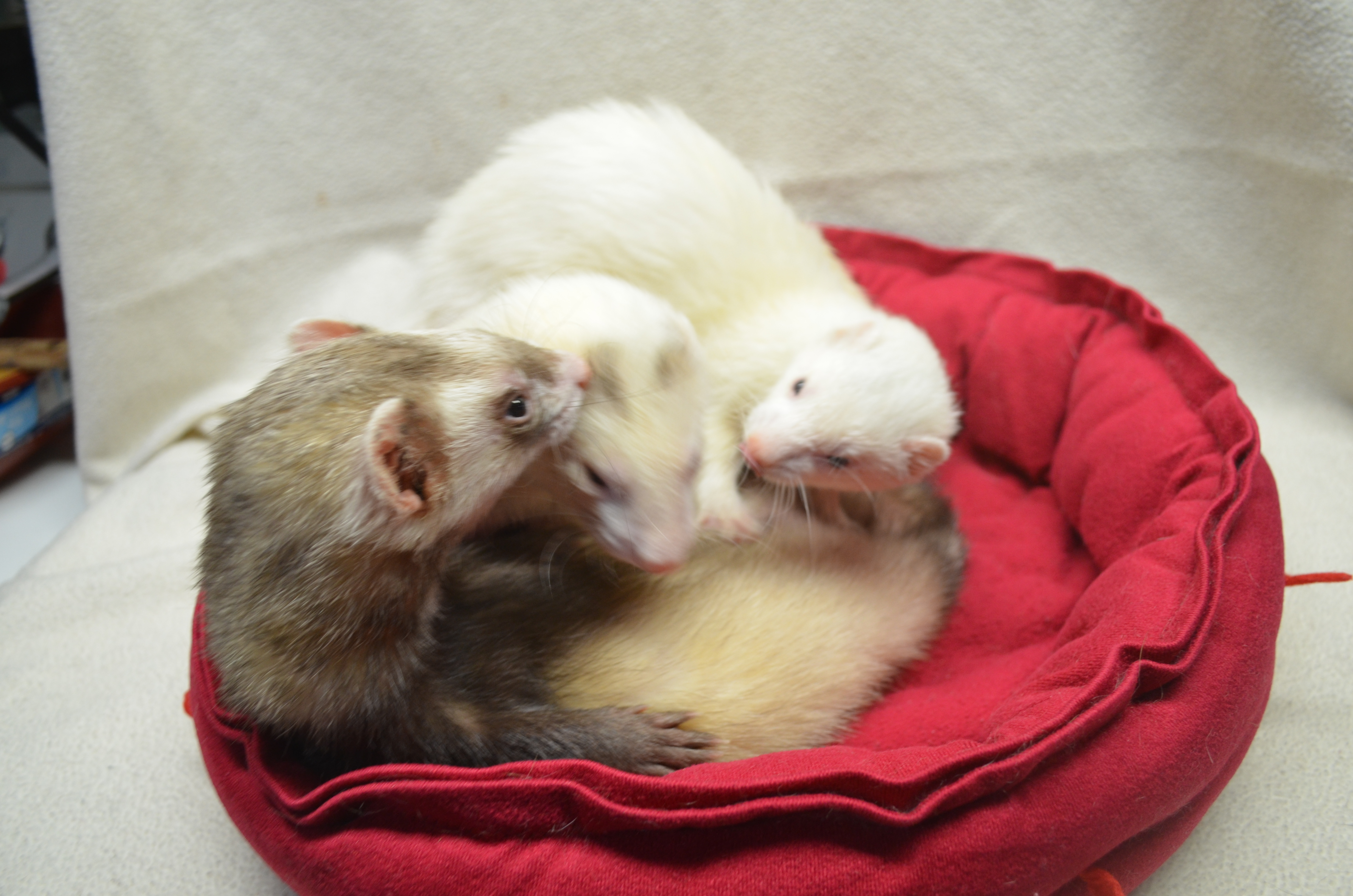 Clyde, Stormy & Lumi