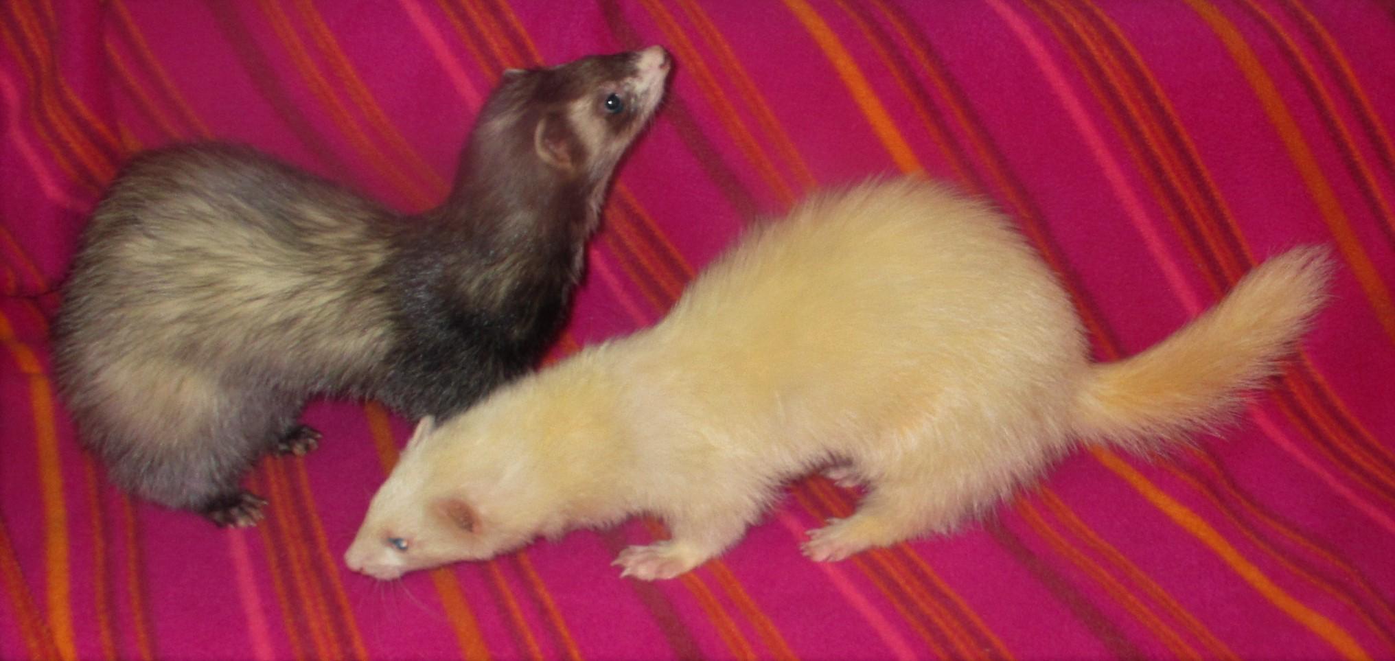 Blanca & Tavi