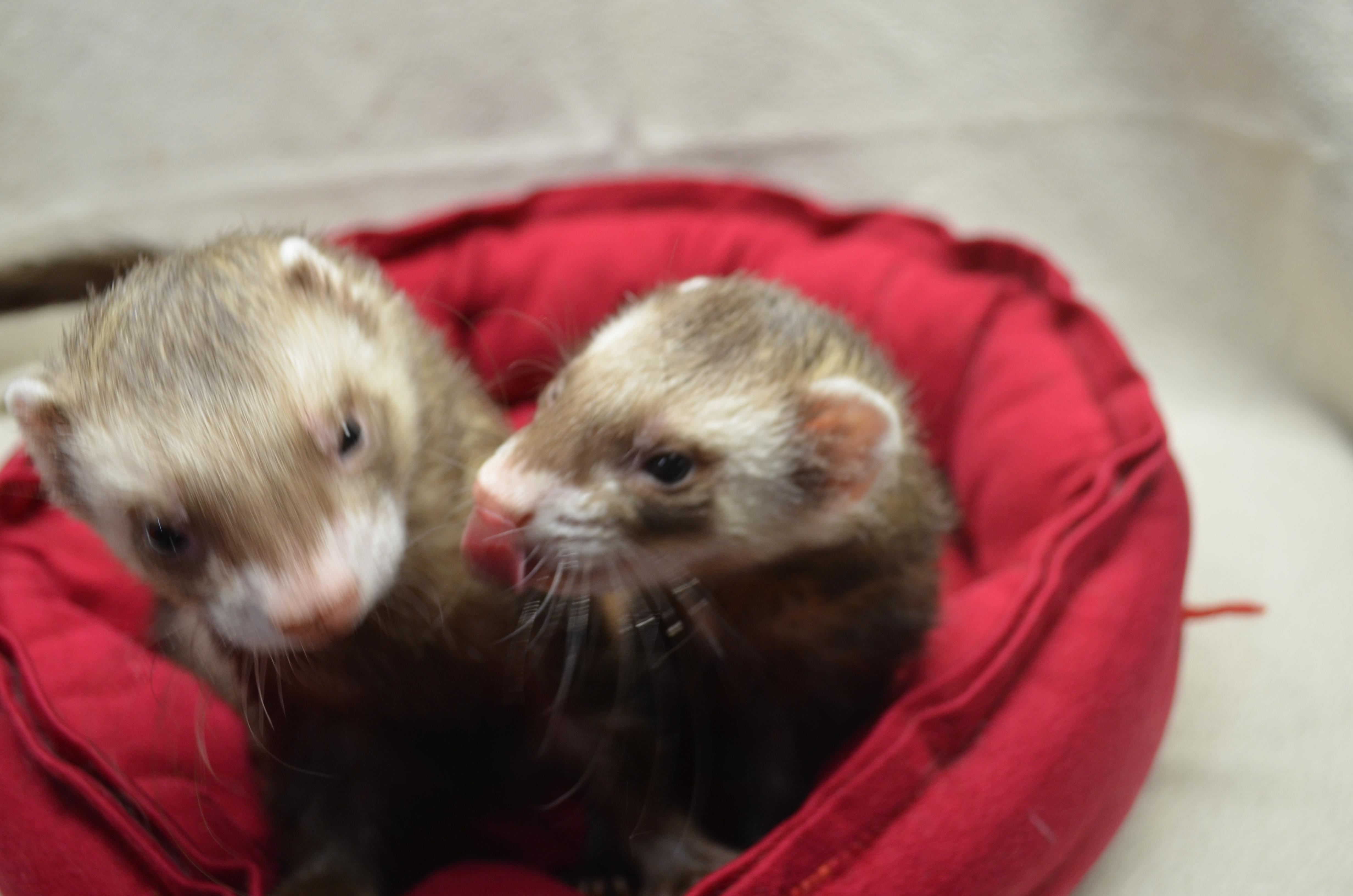 Boba & Kibble