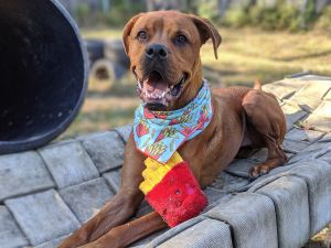 Here at Adopt-A-Dog Fry serves the role of class goofball very wellEffusive in both his love for