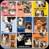 American Shorthair Cat: KITTENS!  KITTENS! m &  f