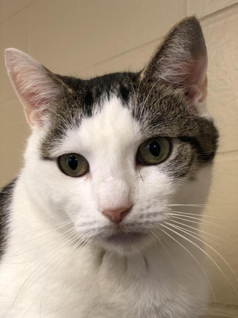 Skye - Colony Cat