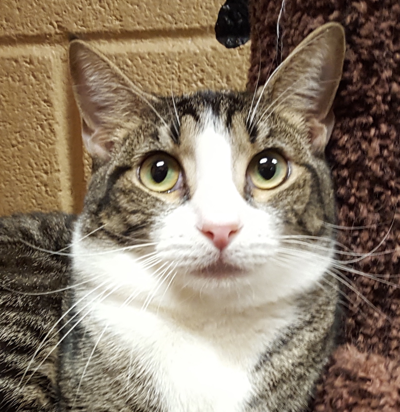 Hunter Special Adoption Fee detail page