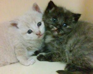Photo of Kittens!