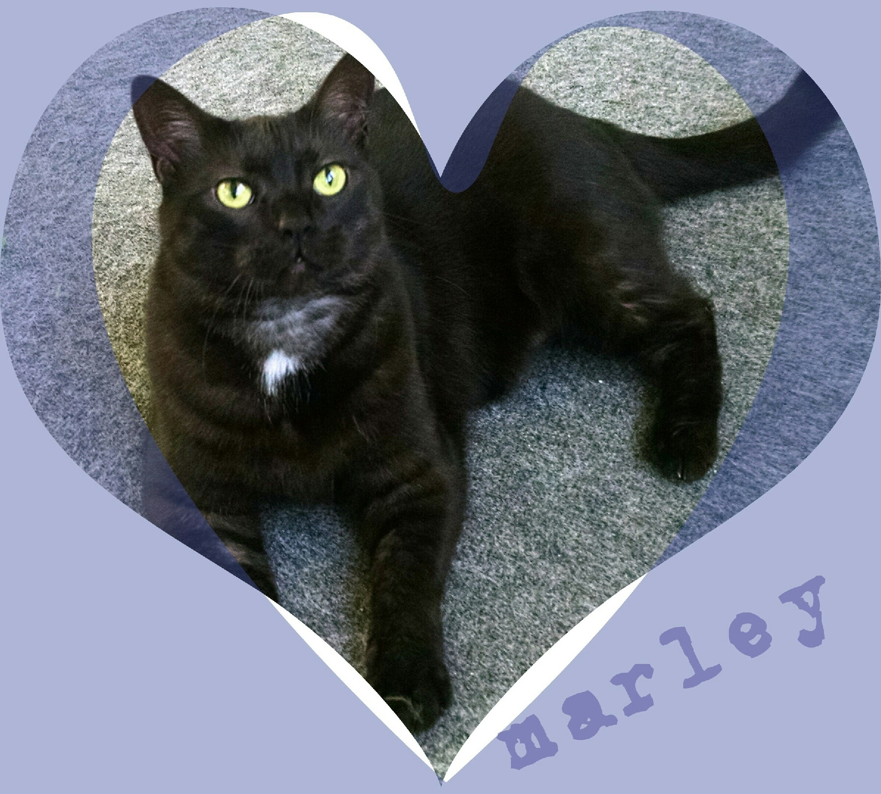 Marley~ The Dream Cat