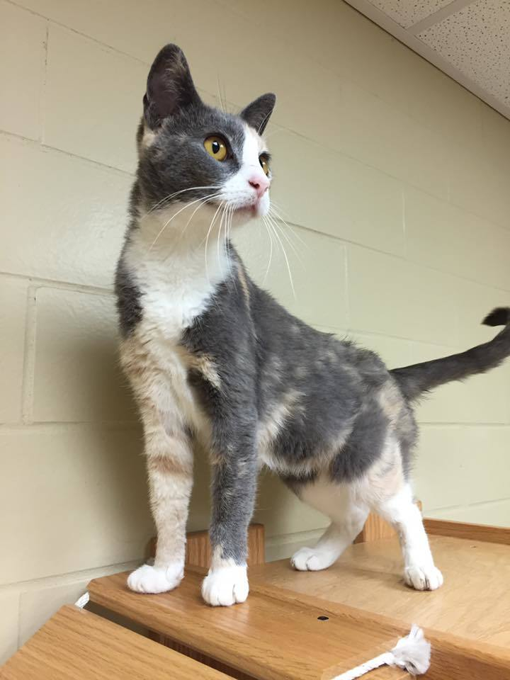 Kaitlyn - Colony Cat!