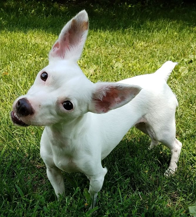 Piper-Cutie Patootie!!