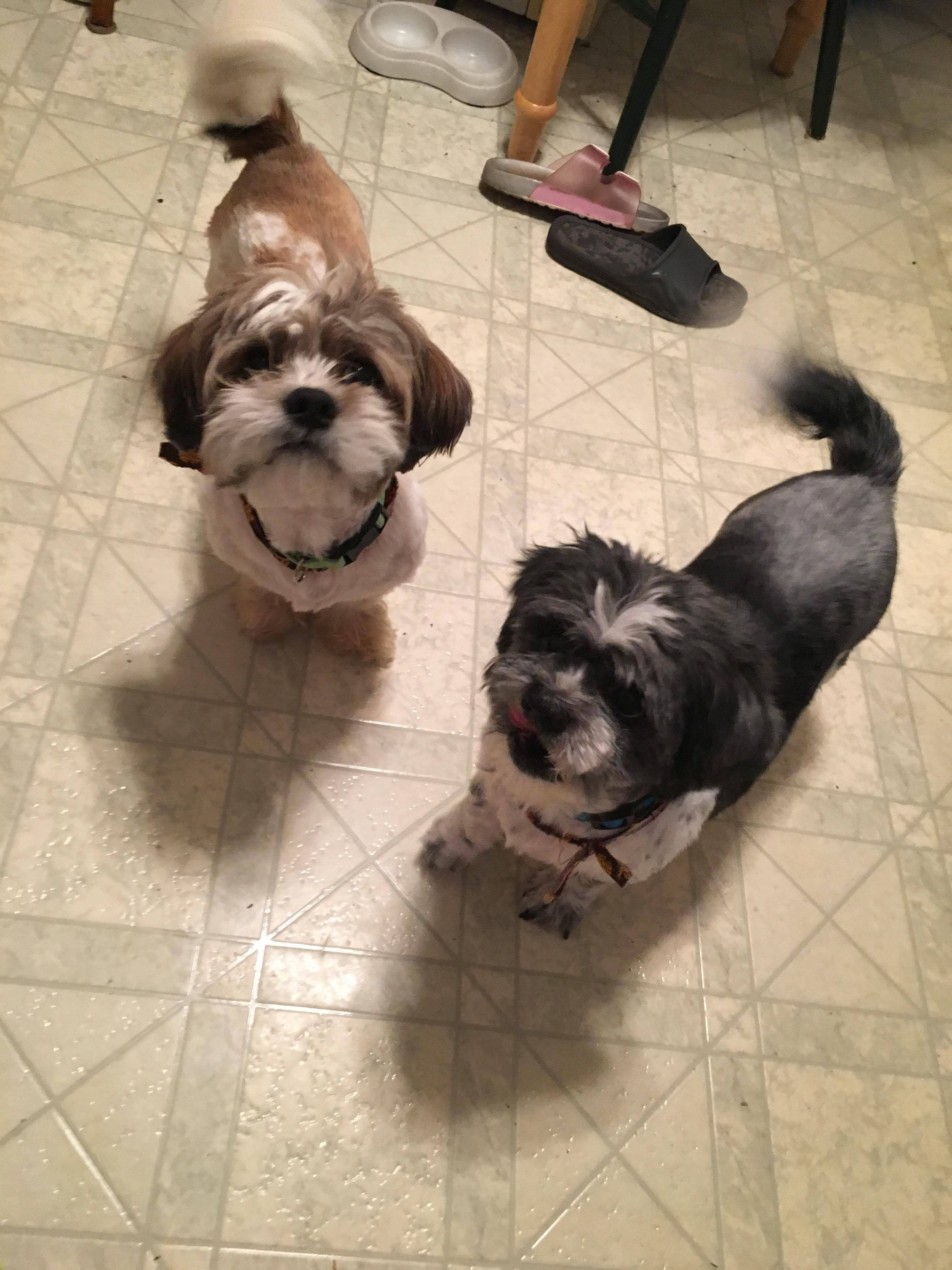 Dog For Adoption Marley And Hoss Near Rochester Ny Petfinder