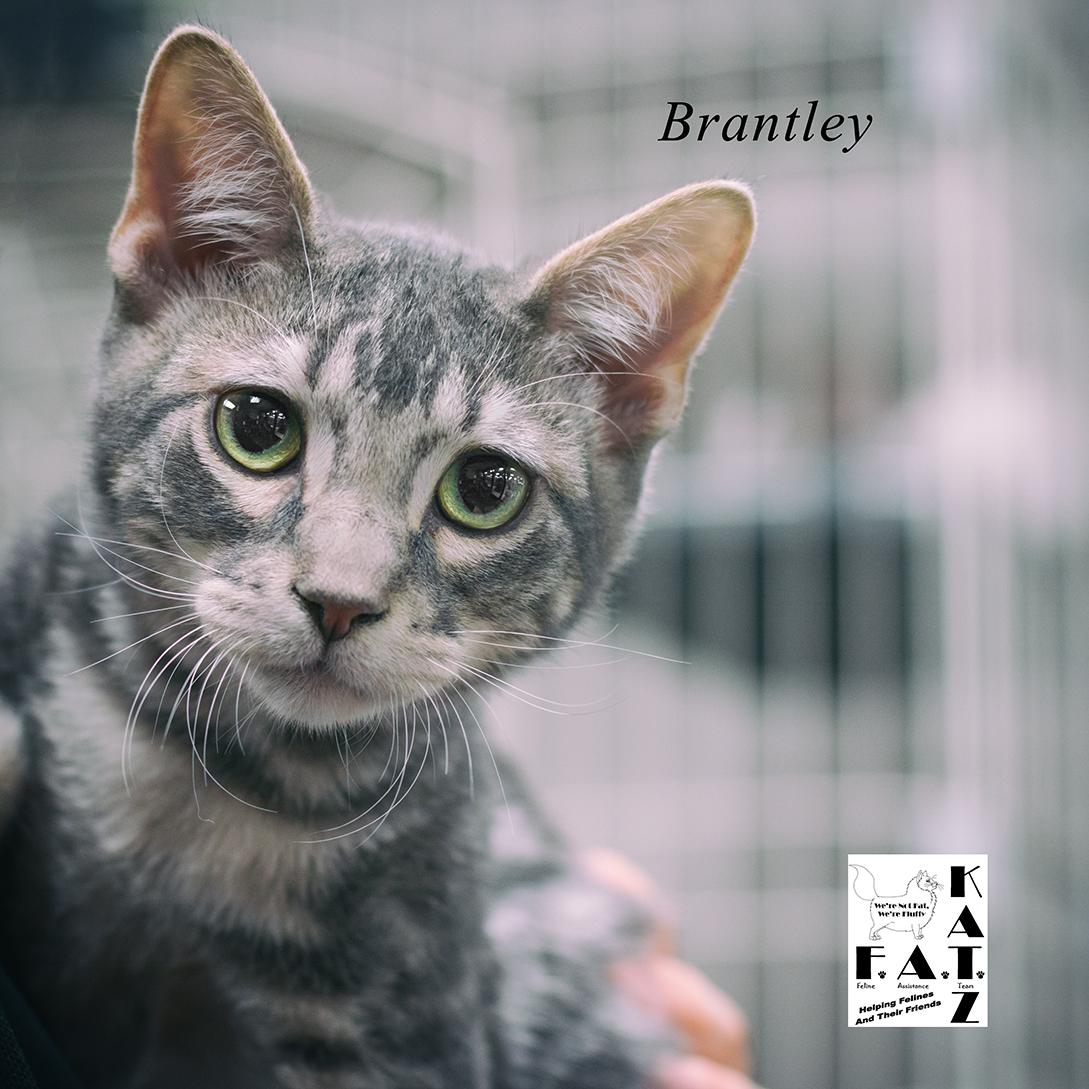 Brantley 1