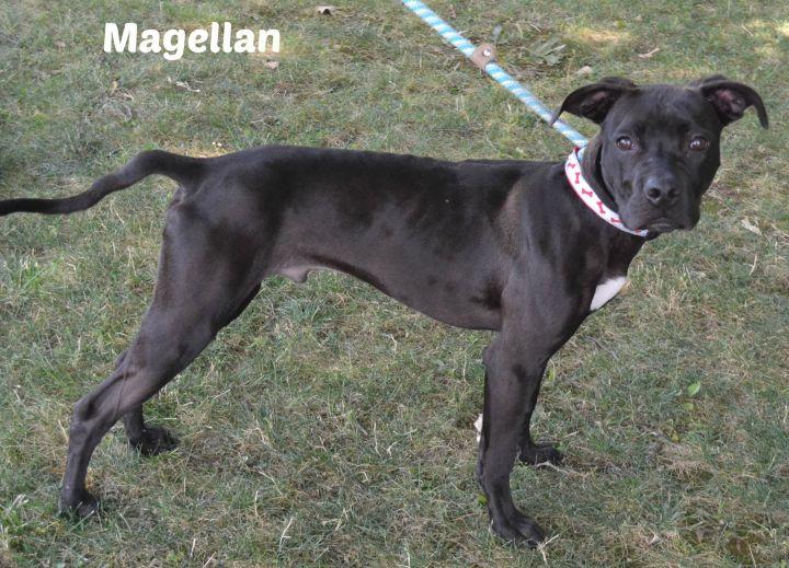 Magellan 3