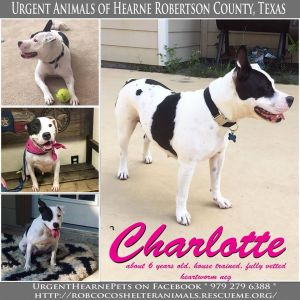 Charlotte is a beautiful 6 year old amd who was used for babies most of her life