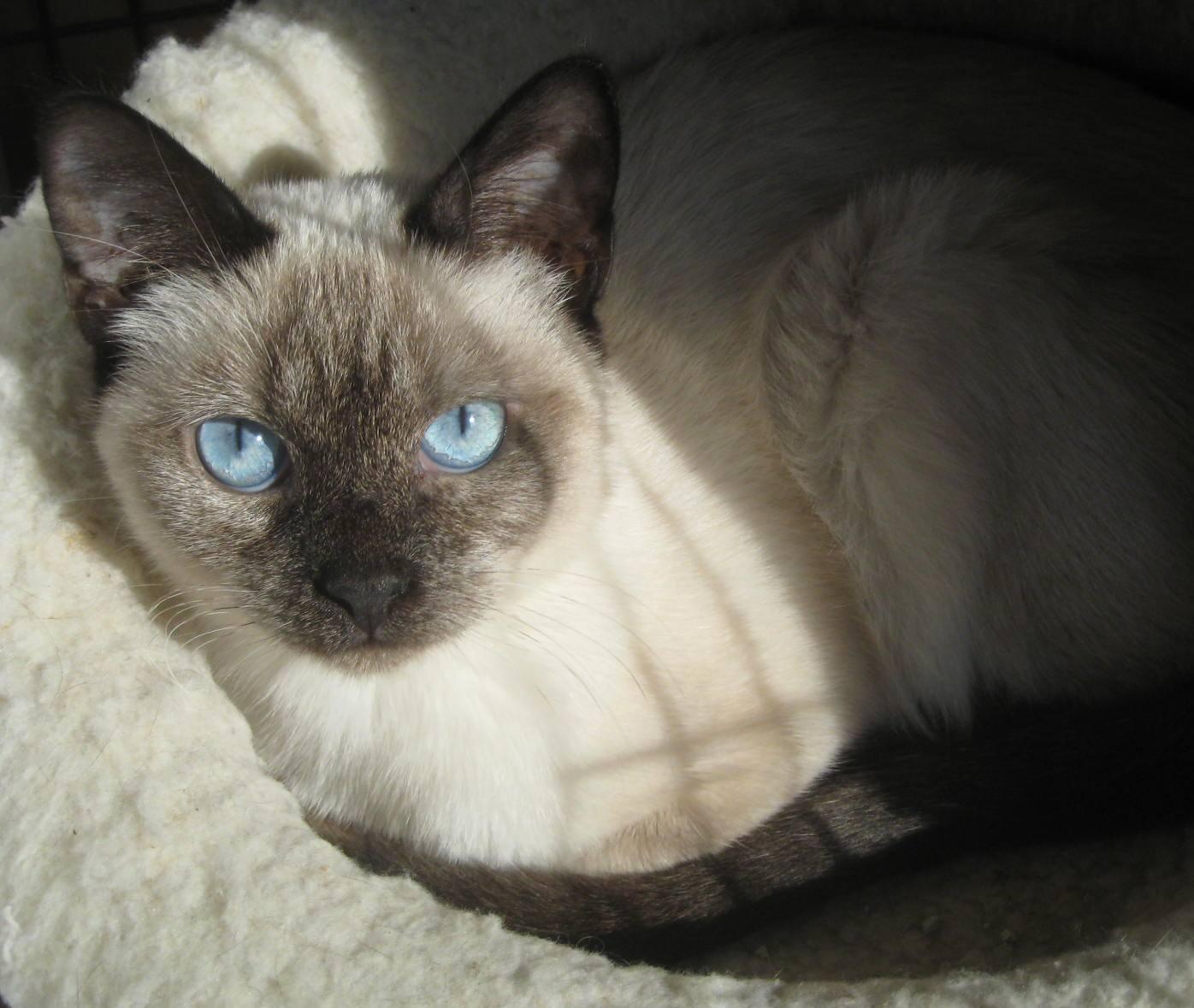 Cat for Adoption – Reese & Twix near Ambler PA