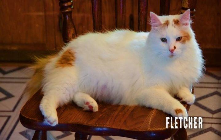 Fletcher 2