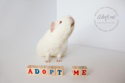 Bugs Bunny (bonded with Buster Bunny) - ADOPTED!!!