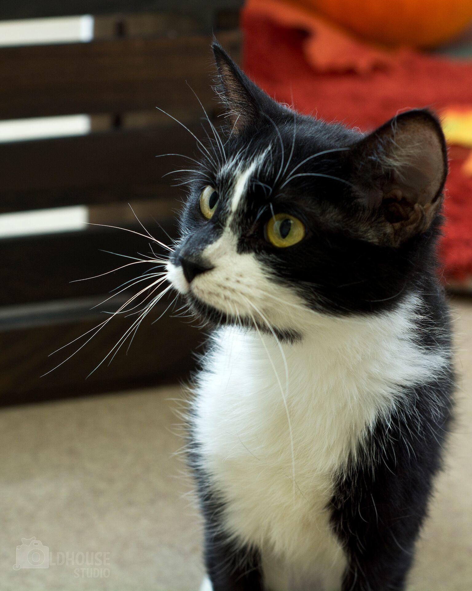 Gemma - Colony Cat!