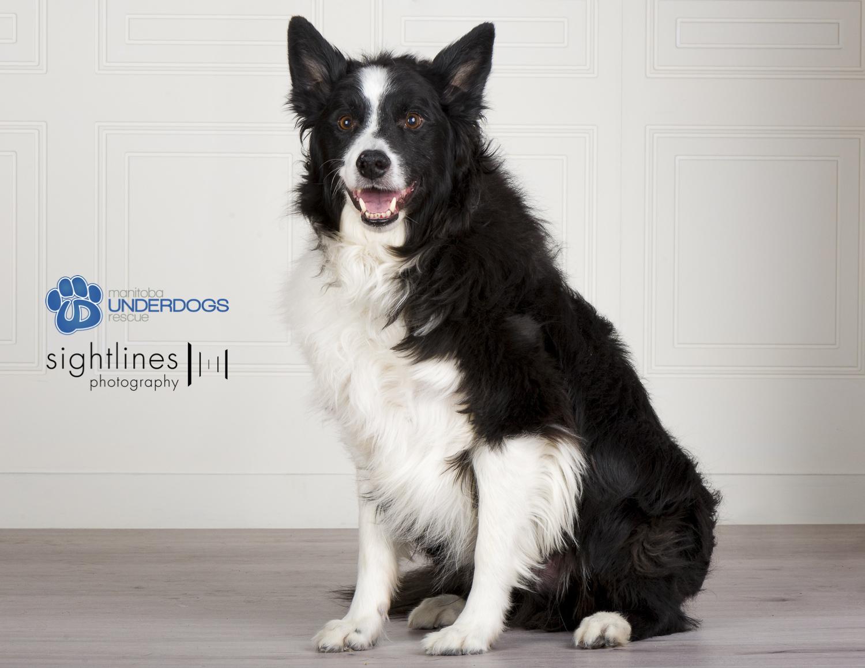 Dog For Adoption Bobby Near Winnipeg Mb Petfinder