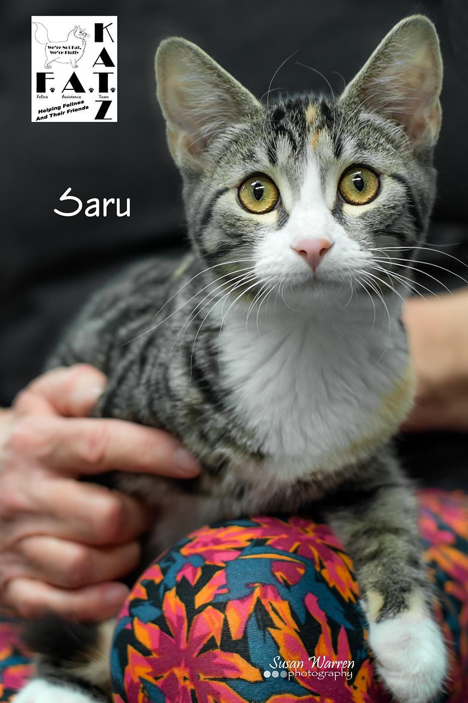 Saru 1